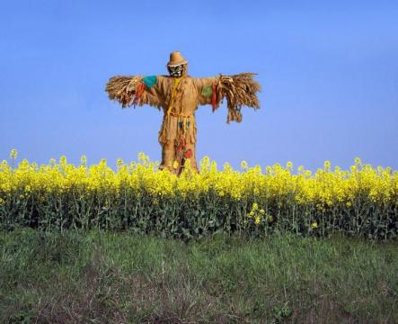 Scarecrow Continuation: Christ Ahnsahnghong, is the cross really an idol?